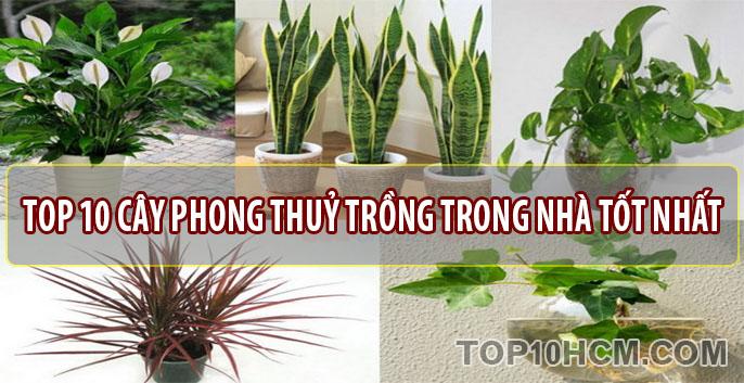 TOP 10 loại cây phong thủy trồng trong nhà tốt nhất – May mắn tài lộc