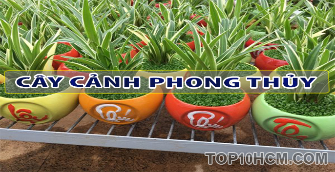 cay canh phong thuy
