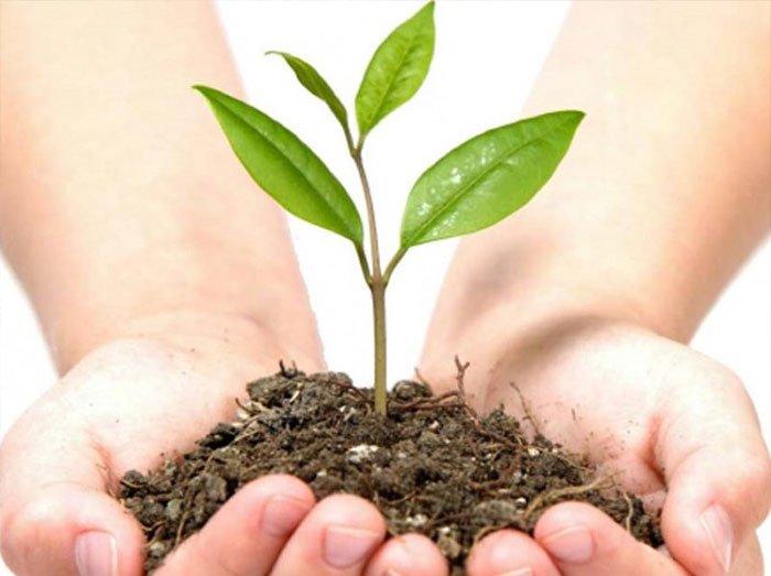 trồng thêm cây xanh