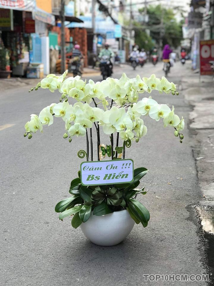 Nhu cầu mua hoa lan hồ điệp ở thành phố Hồ Chí Minh