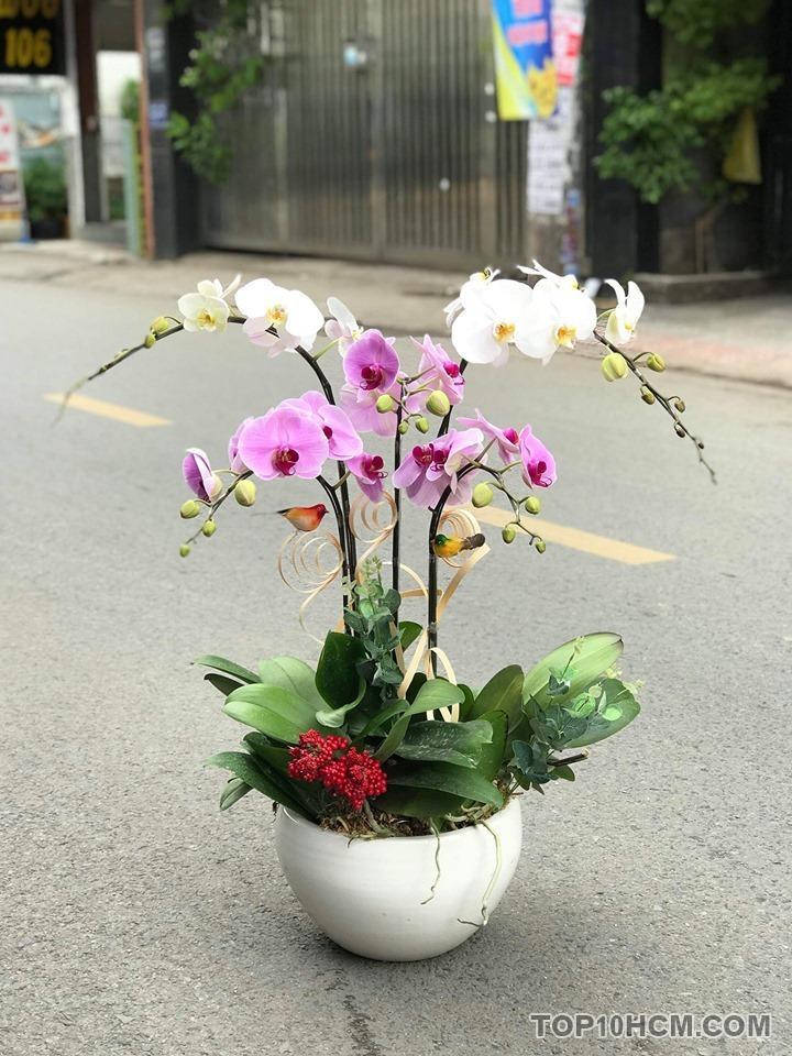 Tìm hiểu ý nghĩa của hoa lan hồ điệp