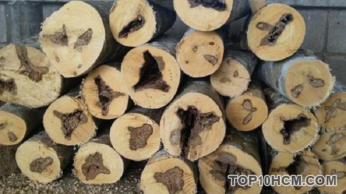 Đặc điểm của gỗ trầm hương mang đến nhiều lợi ích cho người sử dụng