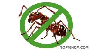 Những cách dân gian để diệt kiến